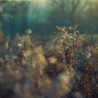 November ends by Somebody--else