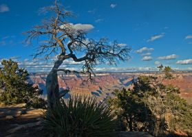 Grand Canyon by Rebacan
