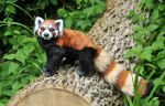 Red Panda by mooki003