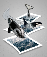 Out of Bounds: Orcas by handslikeice