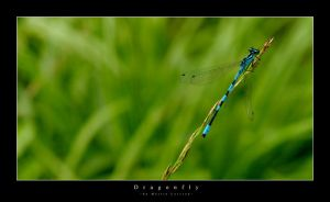 Dragonfly by parasite3