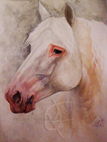 Percheron Portrait by Twilight-Veil