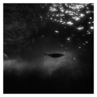 BW with a fish by MissUmlaut