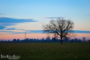 The Lonely Tree by Sarah-BK