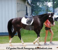 Warmblood 34 by EquineStockImagery