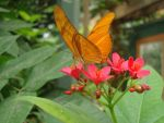 Butterfly by ElectricCurrent