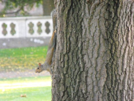 Squirrel on a tree by Maria-Marsbar