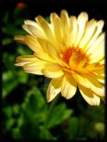 Yellow Flower by niksi13