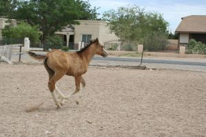 Foal 24 by Mustang4-Stock