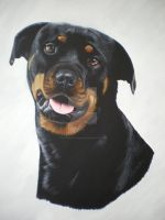 Layla Rotweiller by petportraitman
