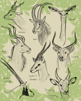 Antelope'd by Doodlee-a