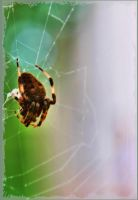 Rainbow Bokeh Spider Stock by Moon-WillowStock