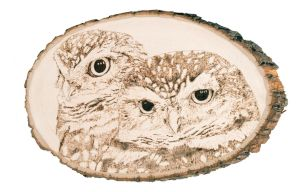 Burrowing Owls Woodburning by EdgedFeather