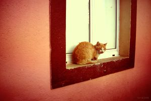 the cat in the window by lore246