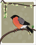 Bullfinch by HappyCrumble