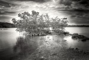 Amongst the Mangroves by Locopelli
