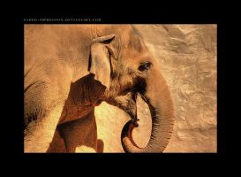 Pachyderm by faded-impression