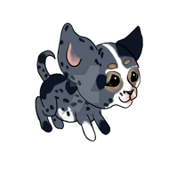 Blue Merle Chihuahua by LilWolfStudios