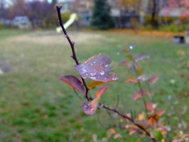 water on leaf by Cab-GdL