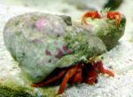 Crabs by killifish101