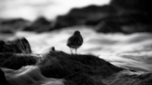 Blurry Bird by KrisSimon