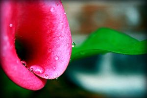 A Flower, Water Drop and Leaf by xLindarielx