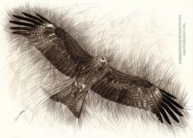 Black Kite by AmBr0