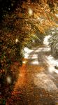 Winter in October 3. by direct-evul