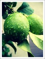 Green Lemon Dew Drops by lykesorad