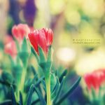 bright. by nhuthanh