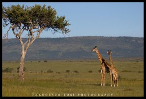 Kenya Wildlife 151 by francescotosi