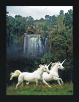 Unicorns by Indelibly-Yours