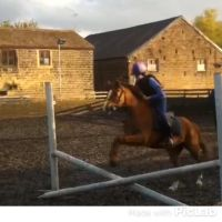 Small jumps with Twix  by ponyriderforever