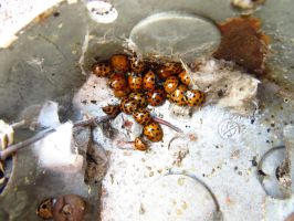 The Ladybugs are Everywhere 2 by howlinmadd123