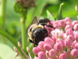 Busy Bee 5 by Jyl22075
