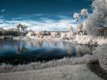 Infrared 57 by Weblen