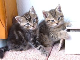 Kittens by EmilyQuarmby