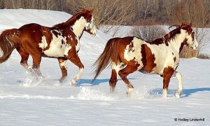 Gallop through the snow by ThunderhillPaints
