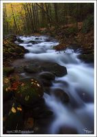 THE Spot GSMNP by TRBPhotographyLLC