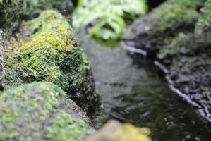 .Moss and Water. by decayedroses