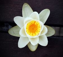 Like A Lotus by wormwood-doll