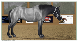 Mare Halter at the Western Proving Grounds by Rising-High-Ranch