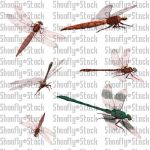 Dragonfly Stock Pack 1 by Shoofly-Stock