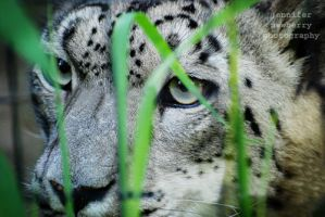 Tiga 09 by filemanager