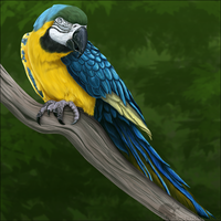 Blue And Gold Macaw by Nioell