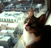 Uptown Kitty by MoreThanNothing