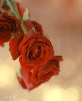 Autumn roses ... by aoao2