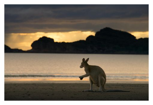 Cape Hillsborough by Cameron-Jung
