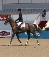 Ridden Liver Chestnut Horse Stock 5 by TheArtisticChoice