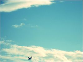 Sky...and sea-gull by fuzzy-blue-light